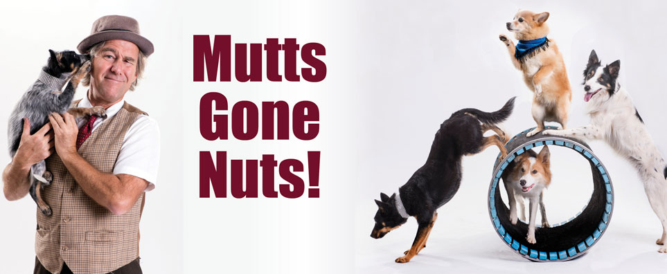 Photo of Mutts Gone Nuts for the Shipshewana Event