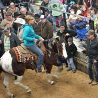 Good Friday Horse Auction